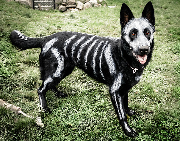 costumes-halloween-chiens-02