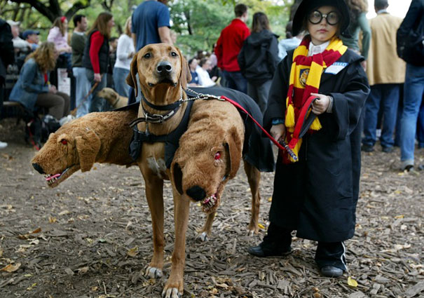 costumes-halloween-chiens-05