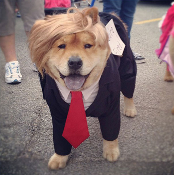 costumes-halloween-chiens-11
