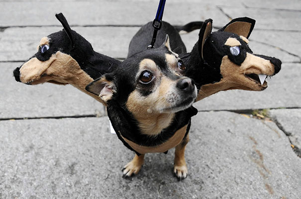 costumes-halloween-chiens-14