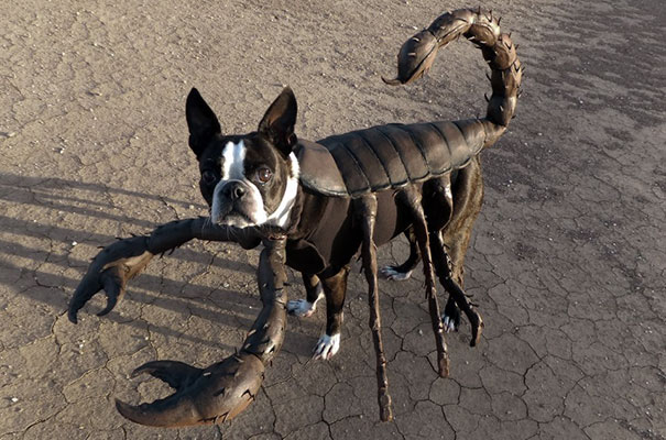 costumes-halloween-chiens-19