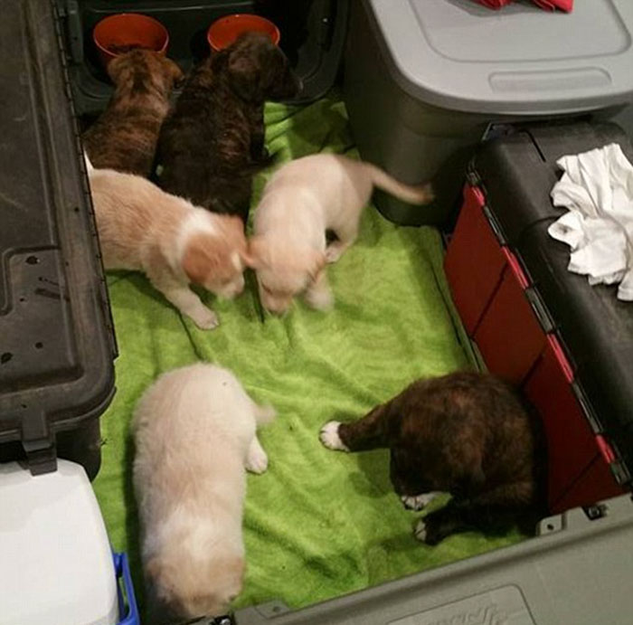 gars-chienne-malade-chiots-03