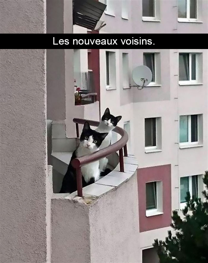chats-legendes-droles-snapchat-01