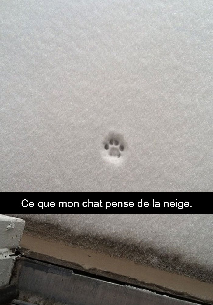 chats-legendes-droles-snapchat-02