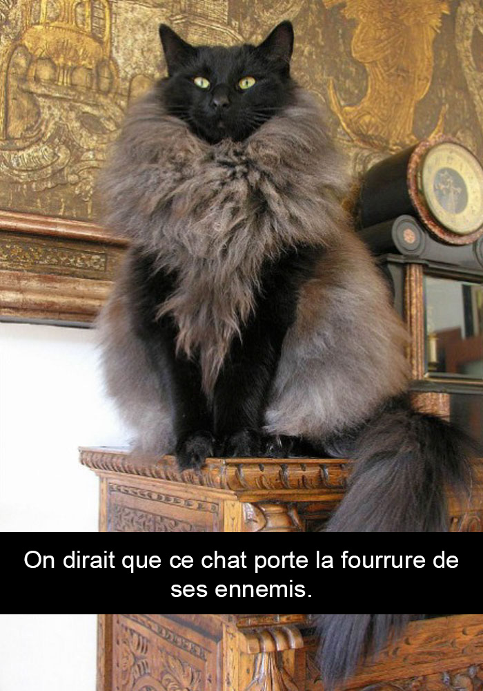 chats-legendes-droles-snapchat-03