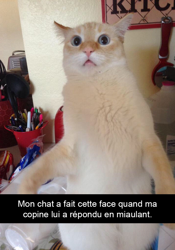 chats-legendes-droles-snapchat-05