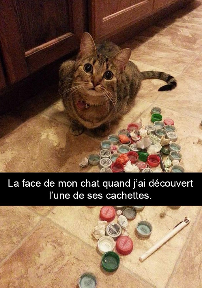 chats-legendes-droles-snapchat-08