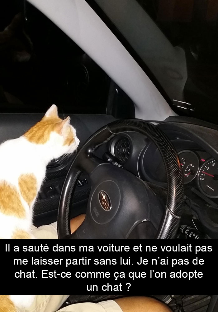 chats-legendes-droles-snapchat-10