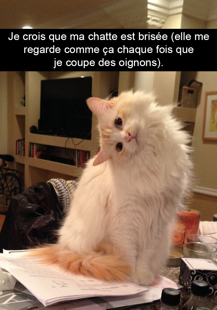 chats-legendes-droles-snapchat-12