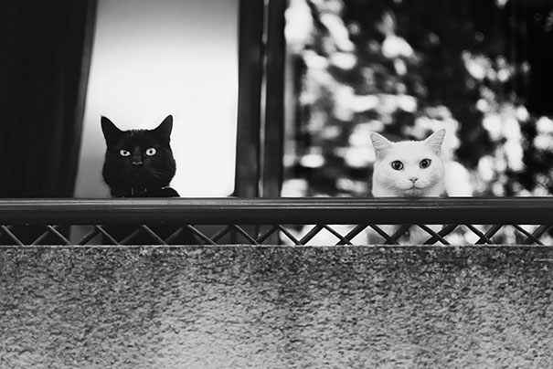 chats-noirs-blancs-03