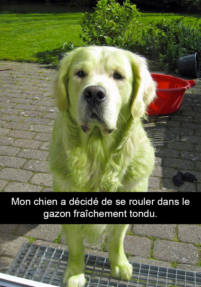 20 photos de chiens av...