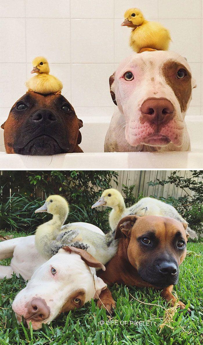 20 photos avant et après d'animaux qui grandissent ensemble