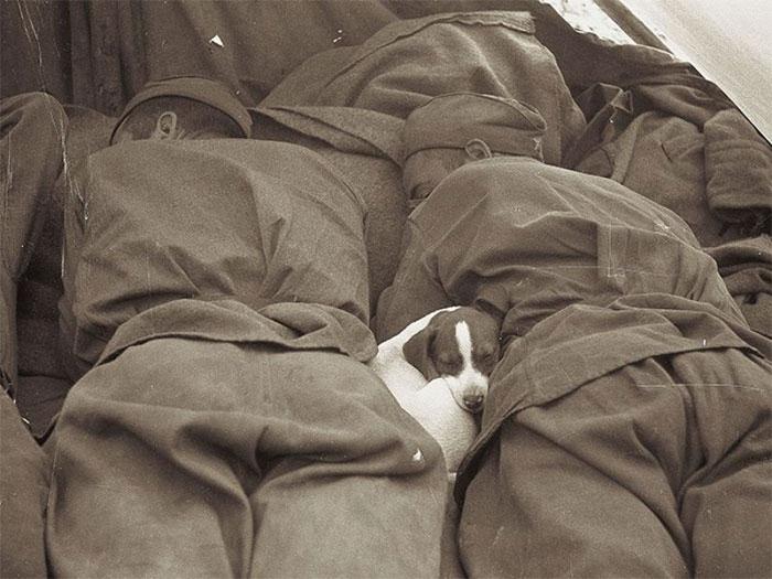 20 photos historiques les plus réconfortantes de tous les temps