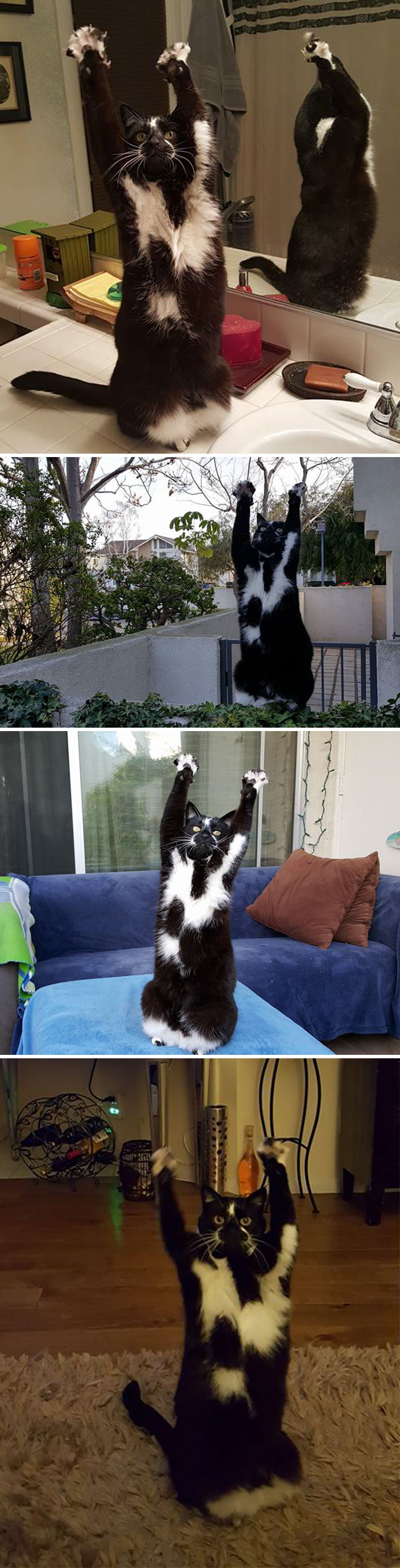 10+ chats au comportement bizarre qui vous feront rigoler