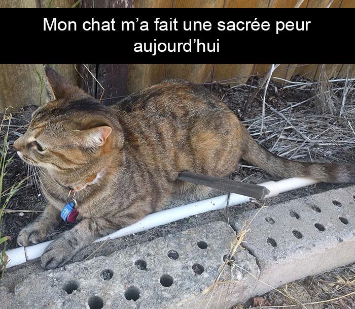 22 photos de chats avec des légendes hilarantes (nouvelles images)