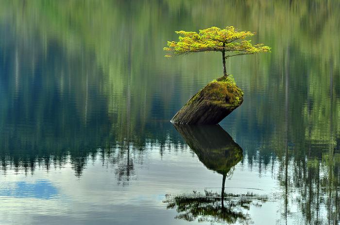 arbres-refusent-mourir-02