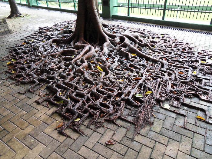 arbres-refusent-mourir-05