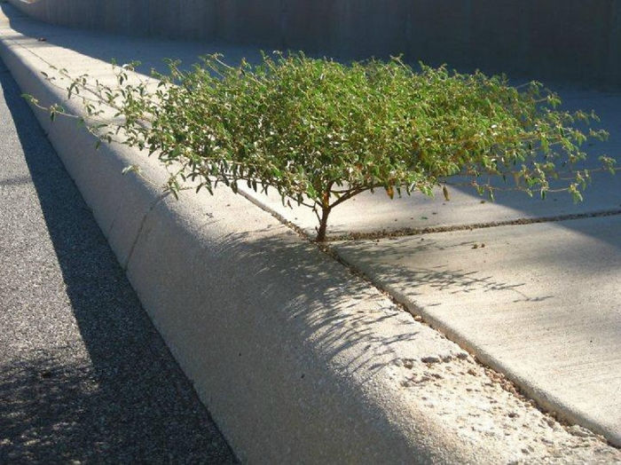 30 arbres redoutables qui refusent de mourir, peu importe la difficulté du combat