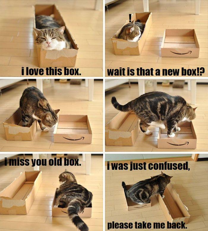 33 fois où les chats ont prouvé qu'il n'existe pas de trop petits espaces