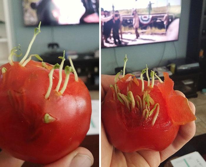 17 photos terrifiantes montrent ce qui se produit quand des fruits et légumes germent prématurément