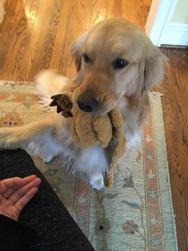 30 fois où des animaux de compagnie ont rapporté les cadeaux les plus étranges à leurs propriétaires