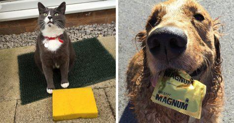 25 fois où des animaux de compagnie ont été pris en flagrant délit