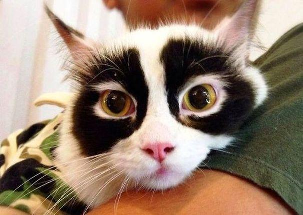 33 chats avec les robes les plus folles de tous les temps
