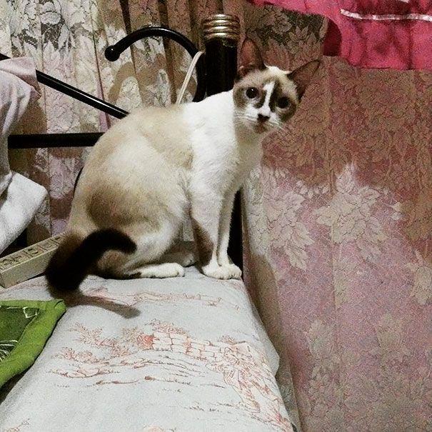33 chats aux robes les plus folles de tous les temps
