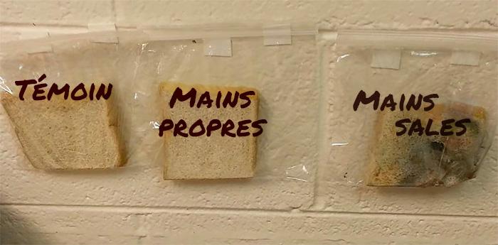 Une enseignante réalise une expérience avec du pain pour montrer aux enfants pourquoi ils doivent se laver les mains, et c'est dégoutant, mais brillant