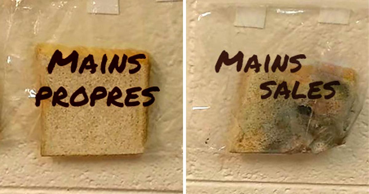 L'expérience scientifique de cette école primaire avec du pain blanc est devenue virale
