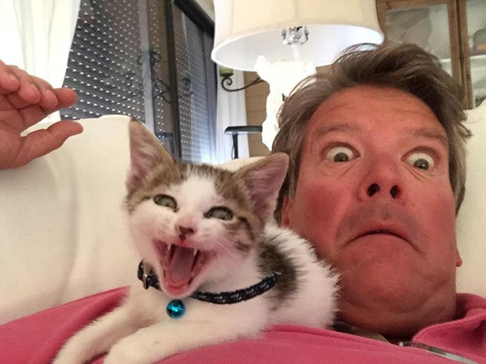 31 fois où des gens ont dit qu'ils ne voulaient pas de maudits chats