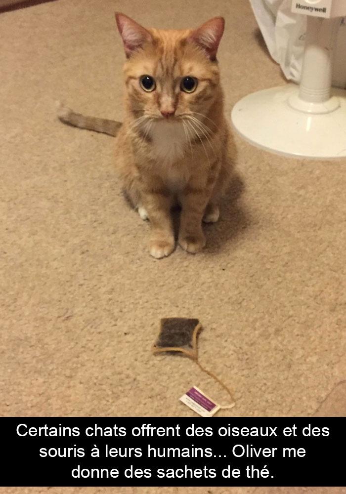 30 photos de chats avec des légendes hilarantes (nouvelles images)