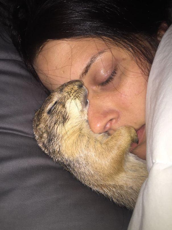 21 animaux effrontés qui ont volé le petit ami de leur propriétaire et n'étaient même pas désolés