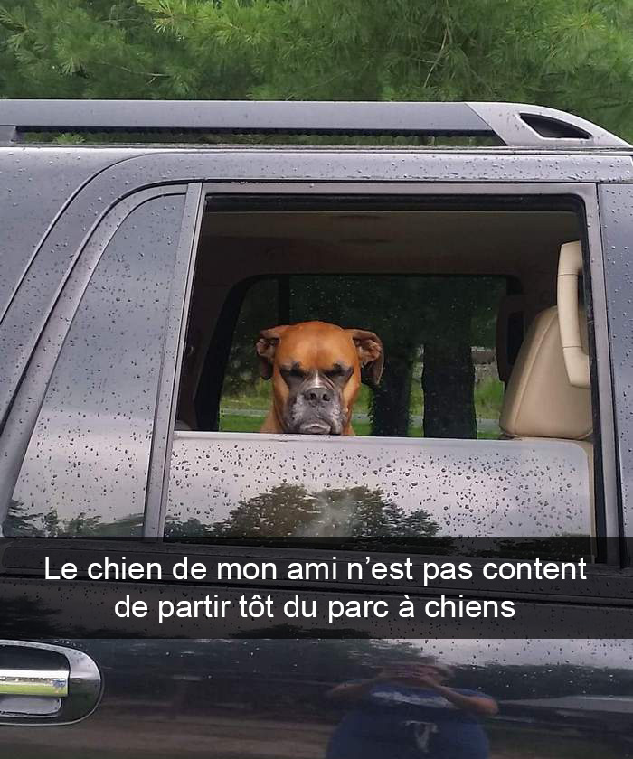 21 photos de chiens avec des légendes hilarantes (4e partie)