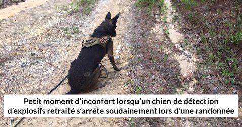 15 photos de chiens avec des sous-titres hilarants (nouvelles images)