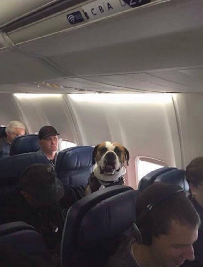29 fois où des chiens ont tout fait pour obtenir le titre de «bon chien-chien», et c'était à mourir de rire
