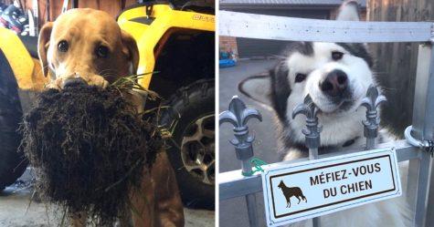 Cette femme s'est fait prendre à abandonner ses 4 chiens, et elle a eu ce qu'elle méritait