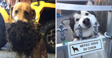 28 photos de chiens bizarres et inexplicables