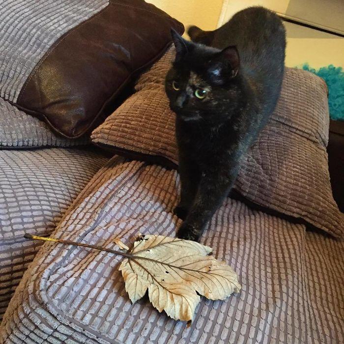 Une chatte réalise que son propriétaire n'aime pas ses cadeaux vivants, alors elle commence à lui apporter des feuilles géantes chaque matin