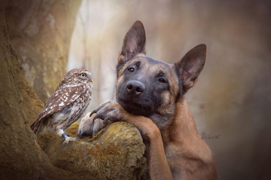Ces 30 photos d'Ingo le chien et ses amies chouettes sont la seule chose que vous avez besoin de voir aujourd'hui