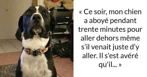 Une chienne visite son humain mourant à l'hôpital pour lui faire ses adieux