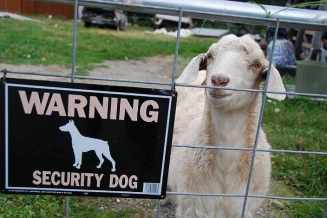 20 échecs de sécurité ridicules qui vous feront dire: «Mais à quoi ont-ils pensé?!»