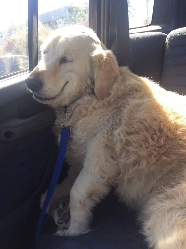 20 animaux qui reviennent tout juste d'une visite chez le vétérinaire, et leurs expressions veulent tout dire