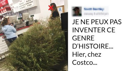 Un castor cherchant un arbre de Noël artificiel aperçu dans un magasin