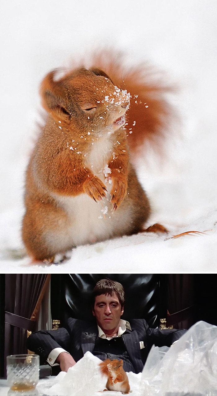 Voici les grands gagnants des meilleures batailles de Photoshop de tous les temps (nouvelles images)