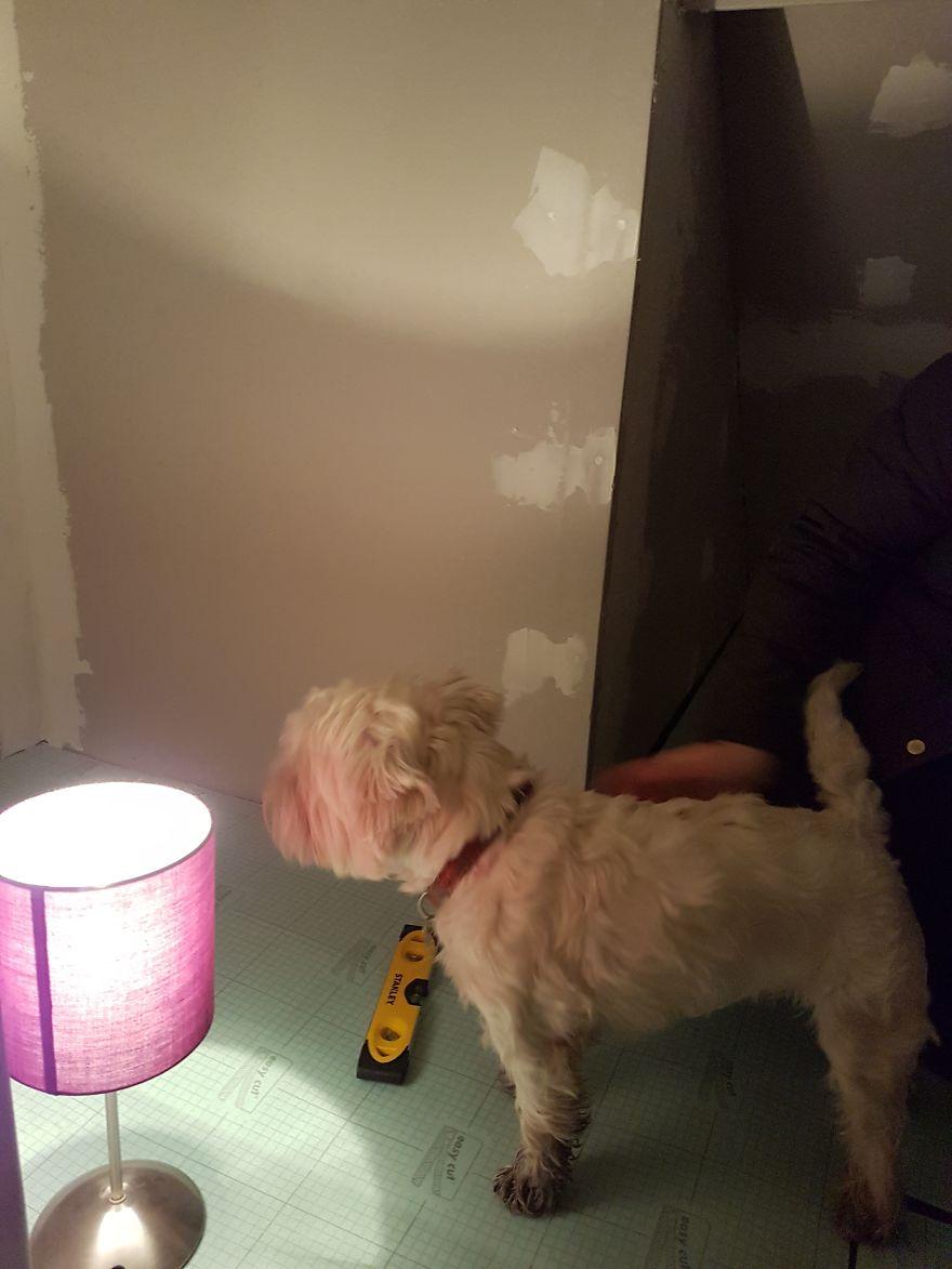 Notre chienne allait avoir une soeur humaine, alors je lui ai construit une pièce sous l'escalier – ça s'est avéré mieux que prévu