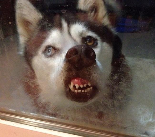 17 fois où des animaux ont été photographiés à leurs pires moments, et c'était à mourir de rire