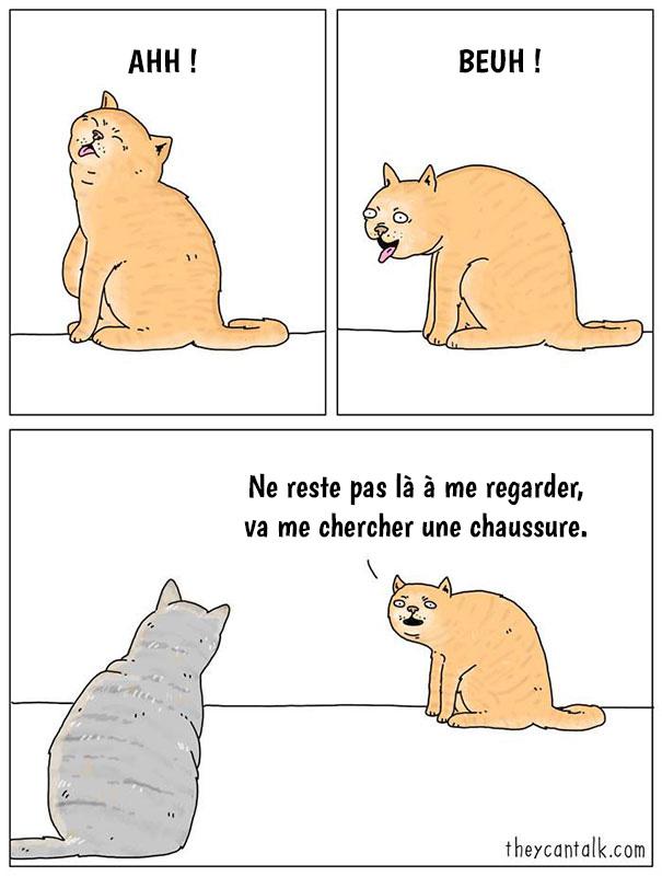 20 différences entre les chats et les chiens qui vous feront mourir de rire