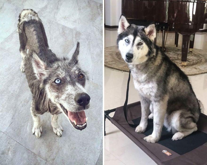 20 photos de chiens avant et après avoir été adoptés qui vont te faire craquer