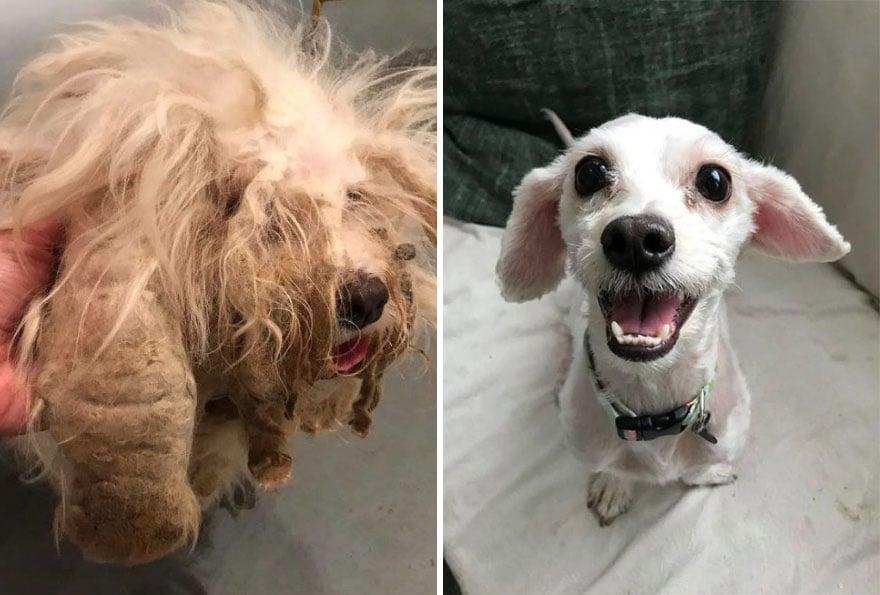 20 photos de chiens avant et après l'adoption qui vont te réchauffer le coeur